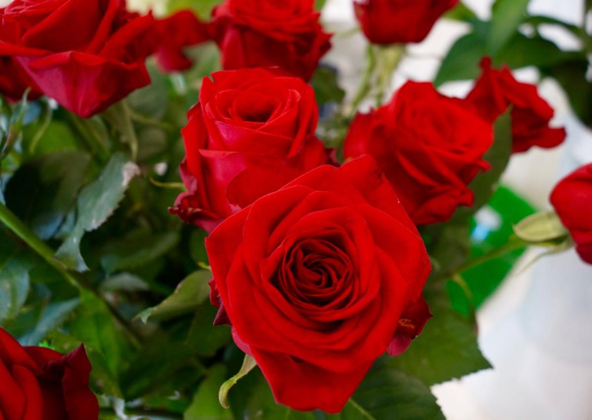 roses rouge