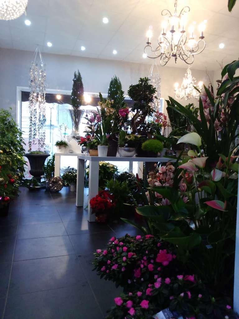 Chlorophylle en Gironde : vente de plantes intérieures et extérieures