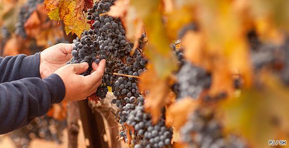 Boissons vente viticulteur bio producteur vin traditionnel vendanges