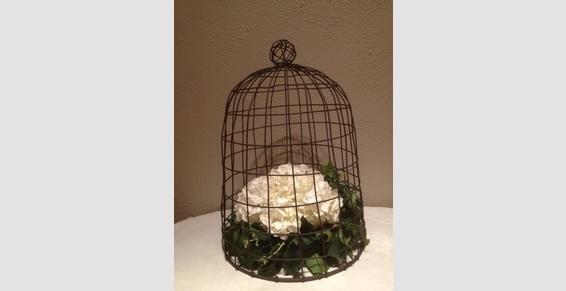 .hortensia en cage