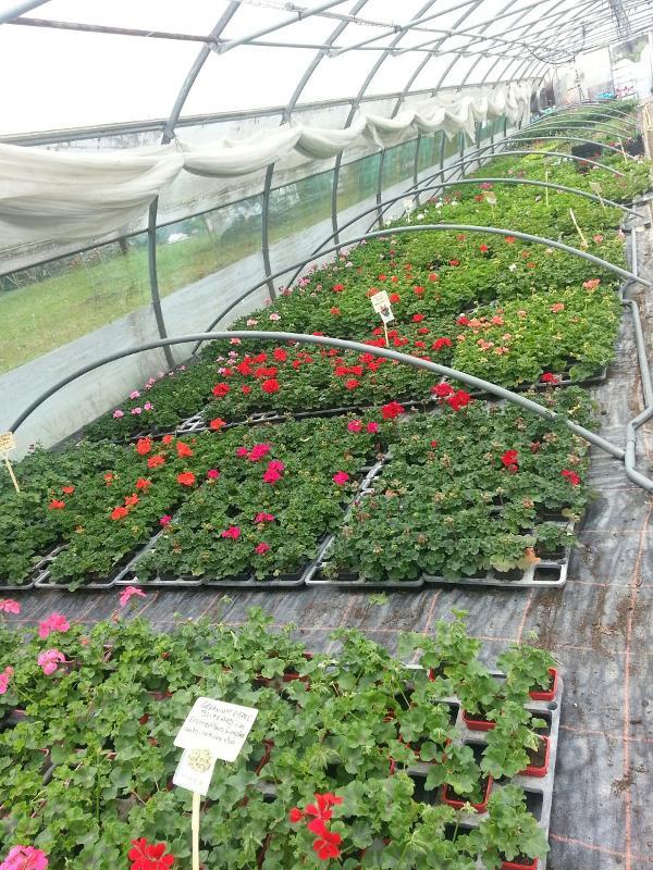 Votre horticulteur à Châteauroux