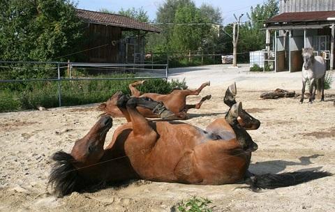 2597-chevaux-ecurie-active-3b