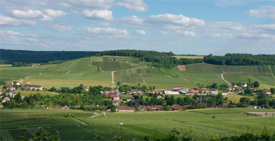 Vue de Festigny et son vignoble