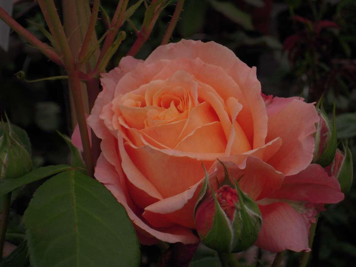 Rikita rosier buisson