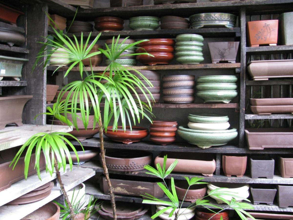Grand choix de pots a bonsai BARBER BORDEAUX