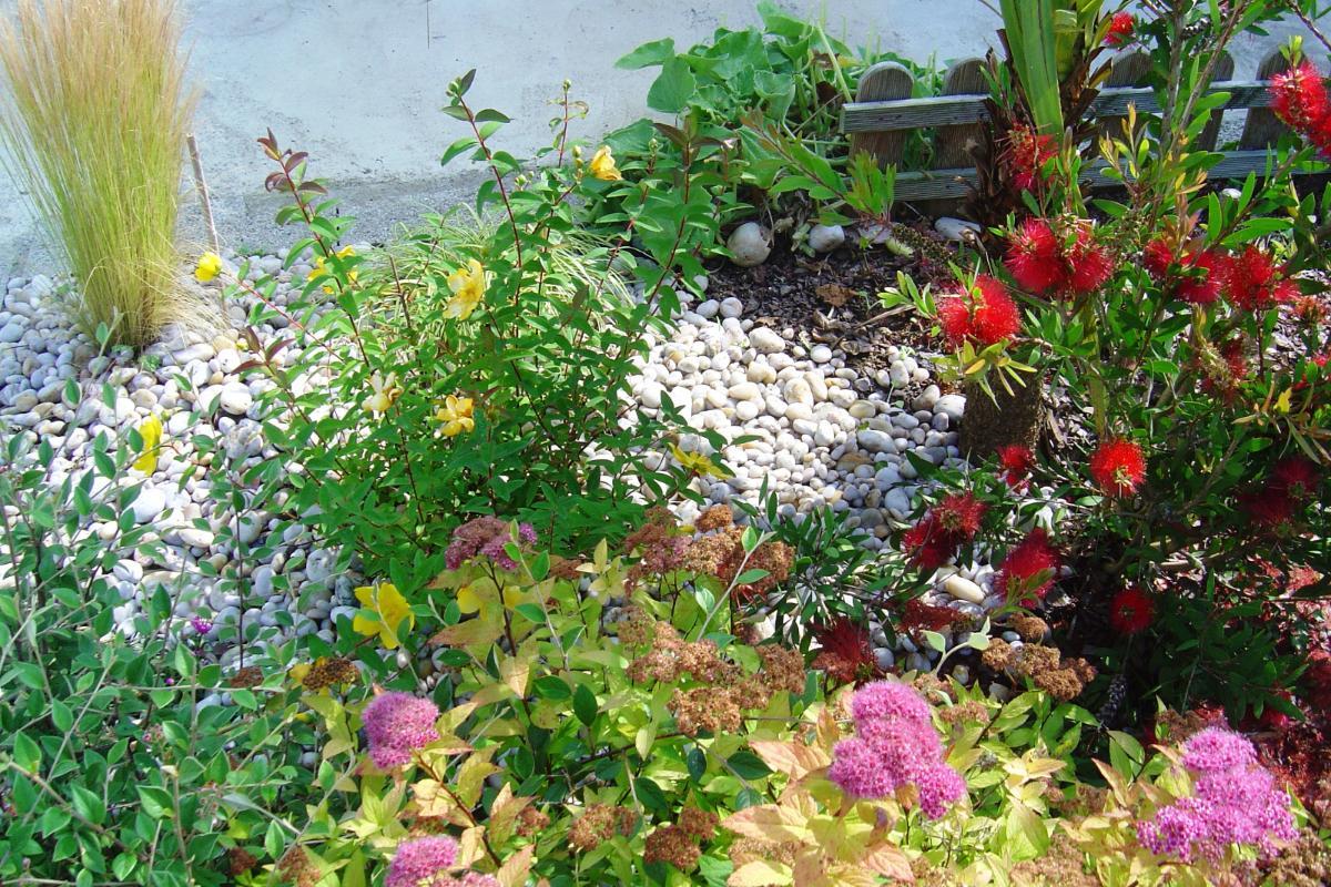 massif en fleurs