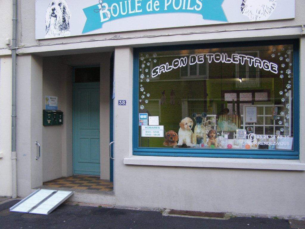 Tonte de chien de toutes races - Boule de Poils à Saint-Omer