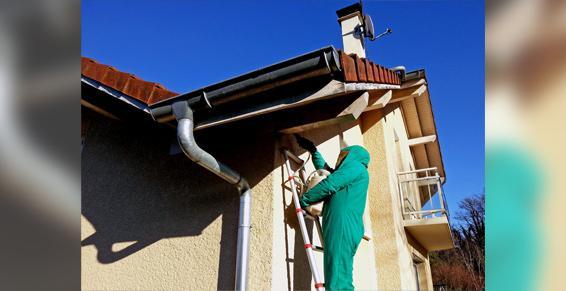 Désinsectisation de nids de guêpes (destruction) - Hygiene-Centre-Est