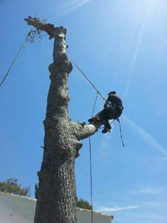 Florian Pillot Espaces Verts, élagage d'arbres à Marseille