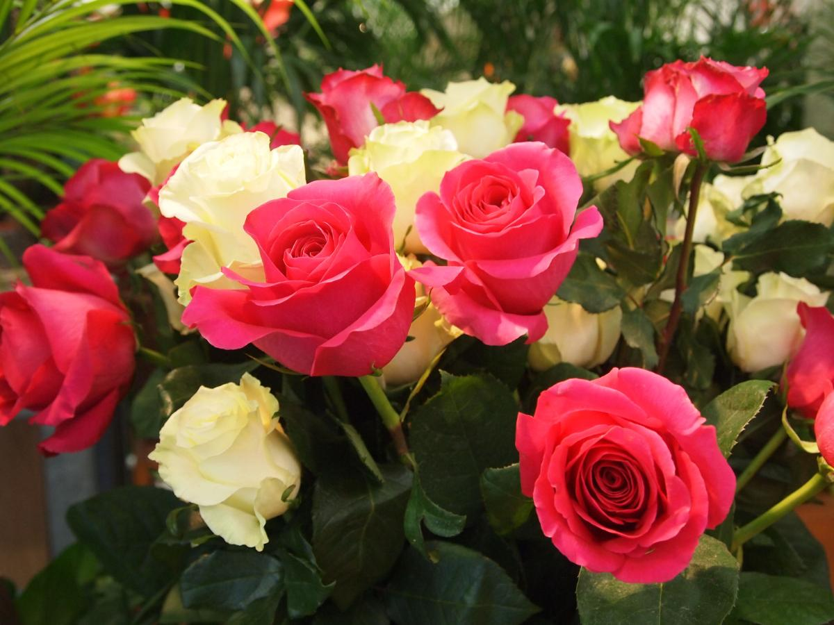 Grande rose à partir de  : 2,50€