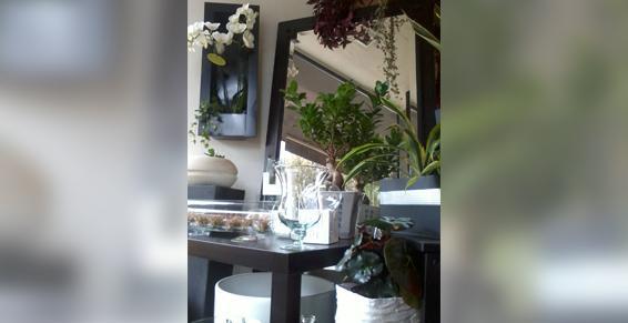 Autres plantes et fleurs - Arnay le Duc