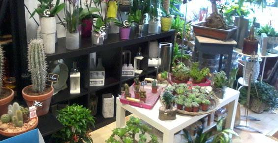 Plantes - Au Cyclamen