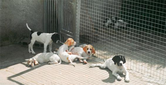 Pension pour animaux de compagnie à Valdallière