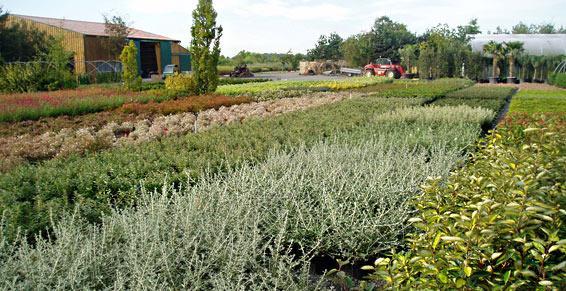 Nombreuses variétés de végétaux