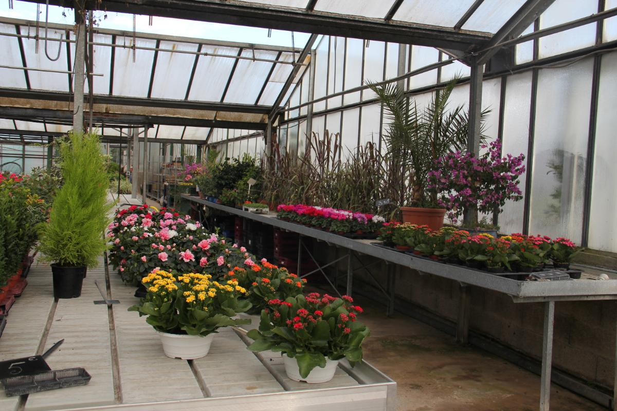 Plantes Variées - Condamin EARL à Chasselay dans le Rhône (69)