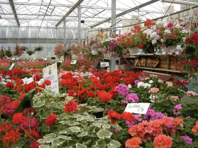 Jardinerie les Serres du Bois - Horticulteurs