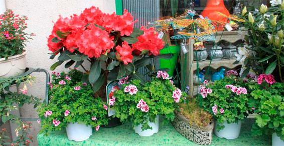 Fleuristes - Vitrine magasin