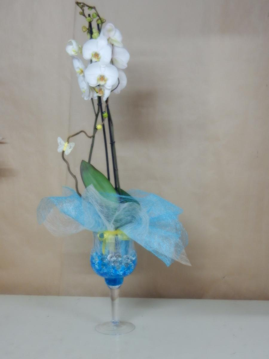 Orchidée phalaenopsis 02