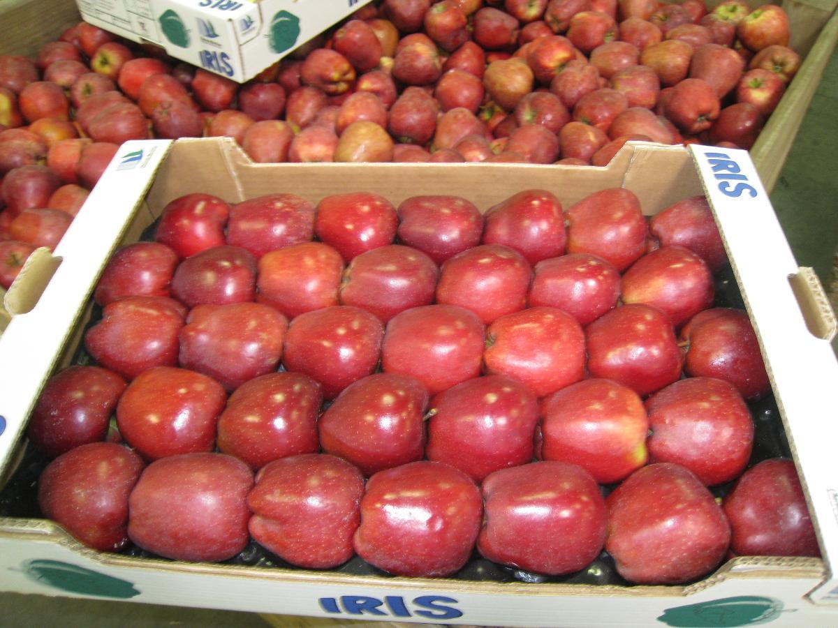 SARL Daudet Fruits à Pessines (17), vente de pommes aux professionnels