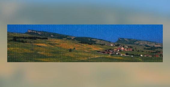 Cépage trentaine d'hectares - Producteur récoltant de vins Fuissé