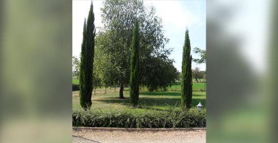 Thiers Paysages se charge de l'entretien de parcs à Thiers