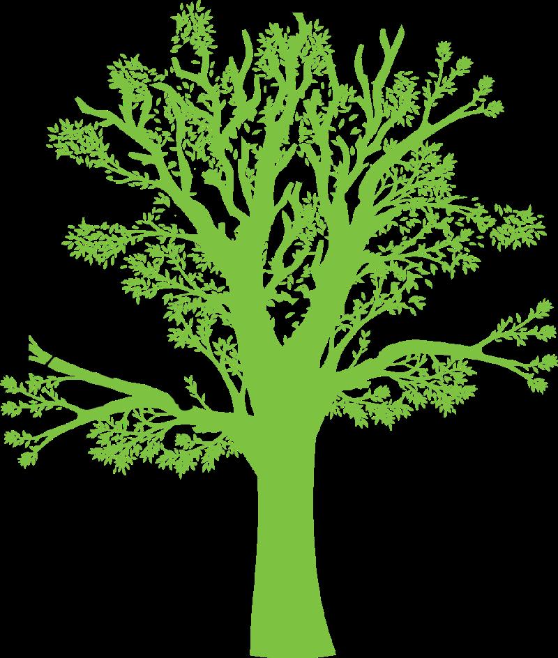 logo arbre de la baie
