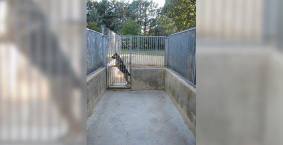 Chenil du Plan : Vue du box, la cour, et le parc d'ébats dans le Var
