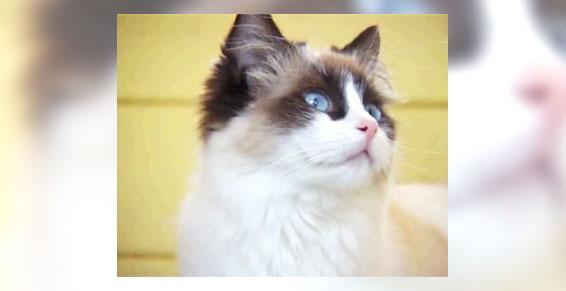 Élevage de chats Mizerieux 42