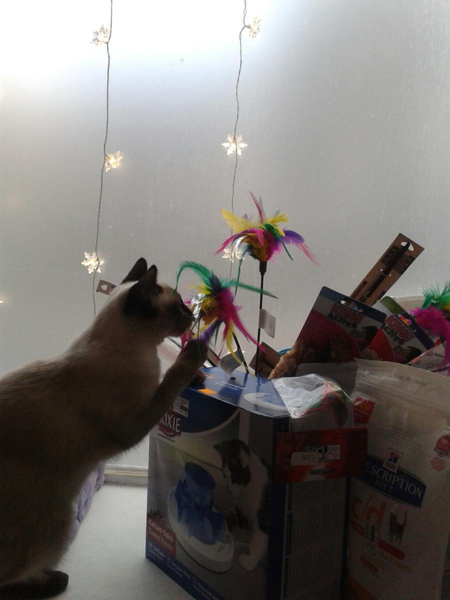 Large choix de jouets pour chats et chiens