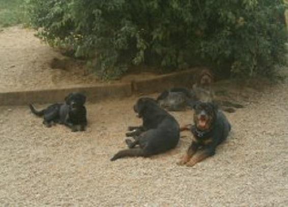 Pension pour chiens à Saint-Agnan (71)