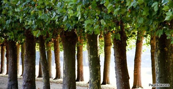 Nous sommes spécialisés dans l'abattage et l'élagage  de tout arbres à Millau